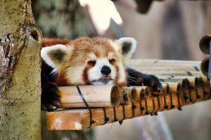 昼寝×カフェインで午後を最高の時間に!効果と最適な時間について